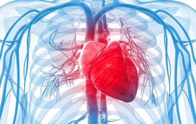 تپش قلب چیست؟