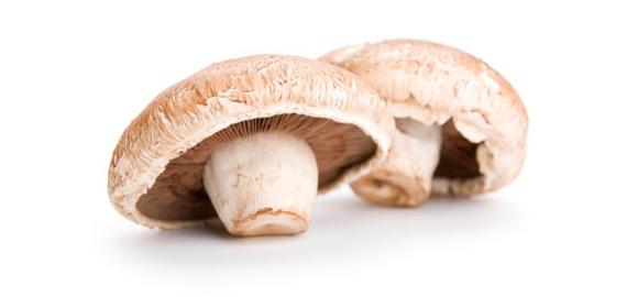 قارچ خوراکی