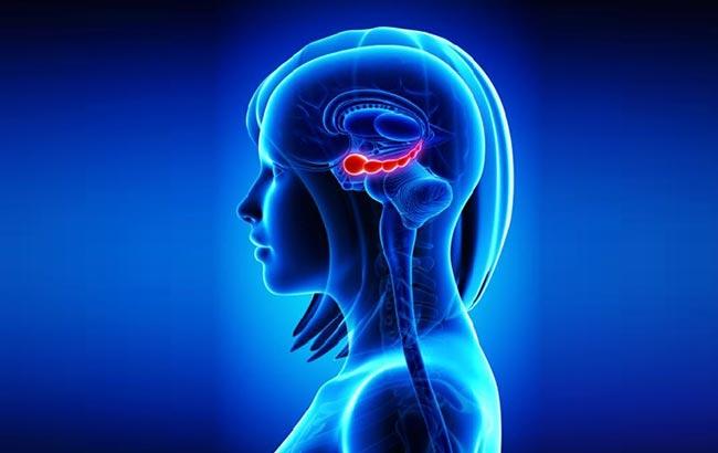 جایگاه احساس عشق و دوستداشتن در مغز